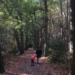 wandeling in het bos met kind